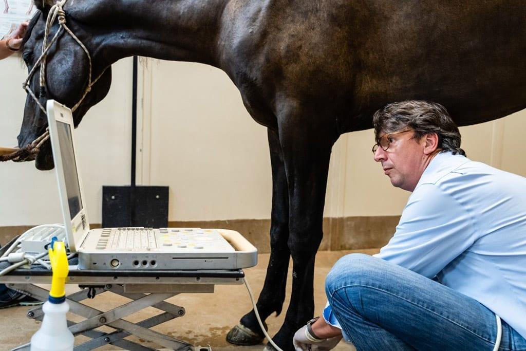 horse prepurchase evaluation, Horse Pre-Purchase Evaluation