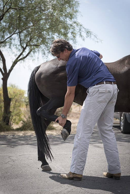 Cave Creek Equine lameness evaluation flexion