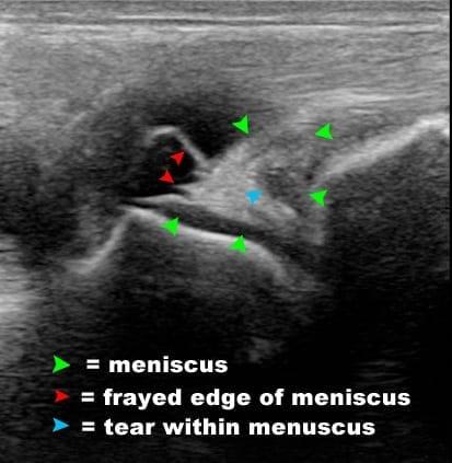 equine ultrasound, Equine Ultrasound