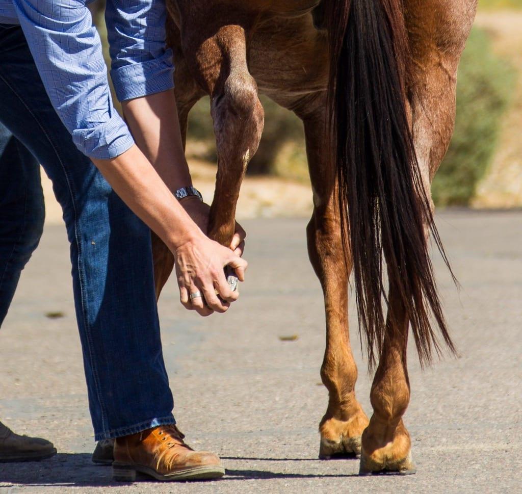 equine lameness evaluation, Lameness Evaluation