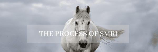 standing equine mri, Cave Creek Equine's Newest Addition – Standing Equine MRI