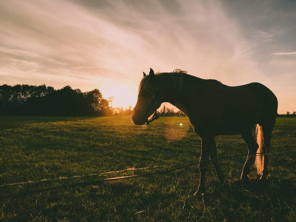 horse care in summer in arizona