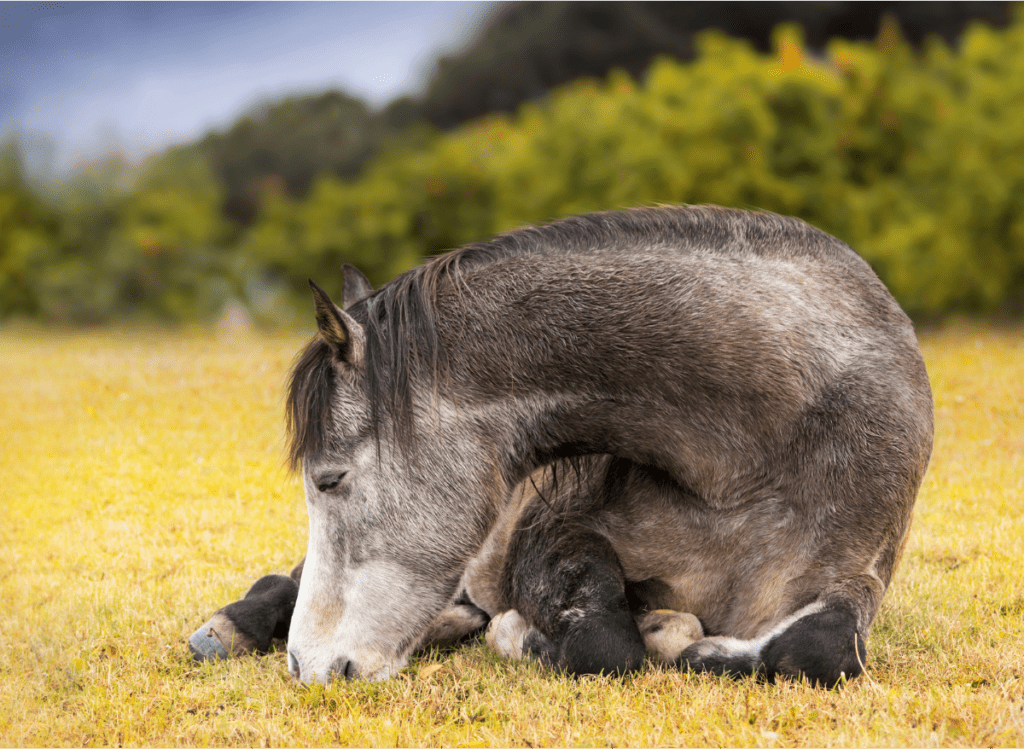 horse disease, Common Horse Disease