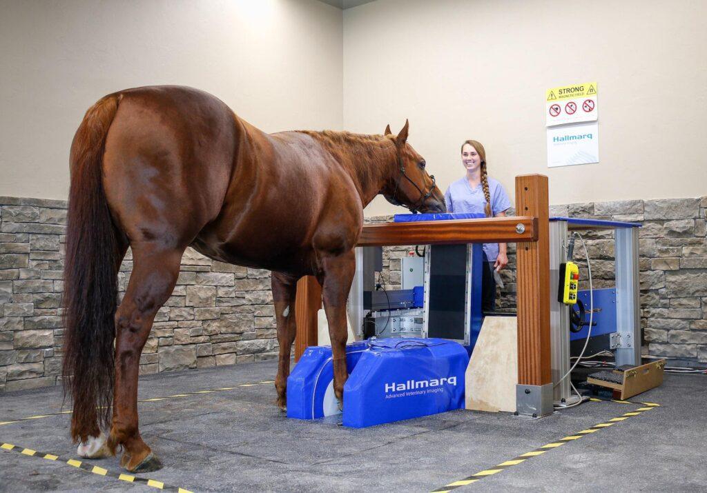 Equine MRI Scanning, Standing Equine MRI Scanning