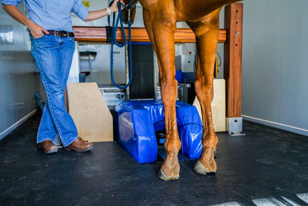 Equine MRI Scanning, HALLMARQ Standing Equine MRI Scanning